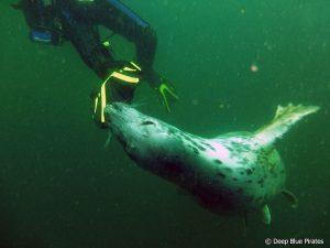 surprise seal fin attack